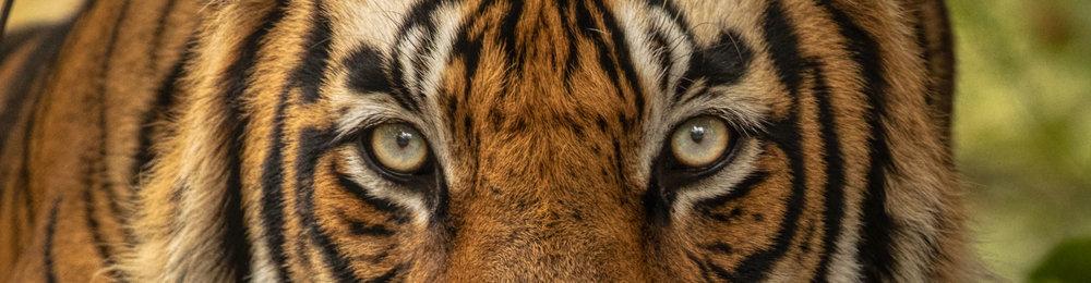 yorkshire_wildlife_photographer-99.jpg
