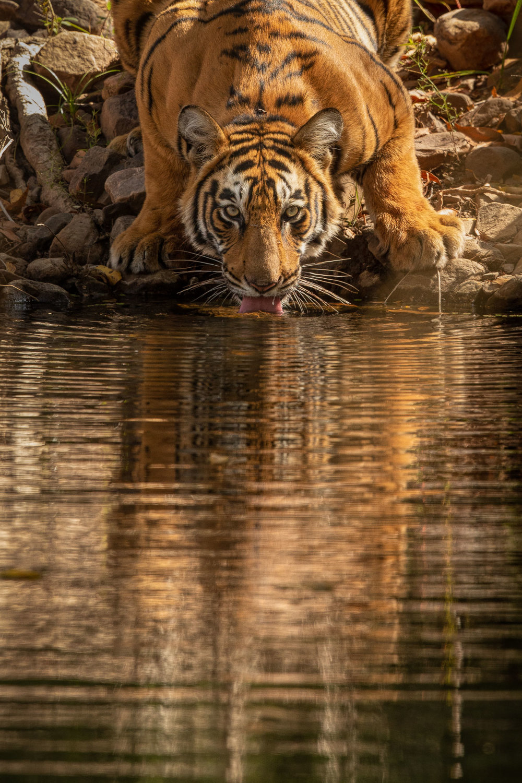yorkshire_wildlife_photographer-1.jpg