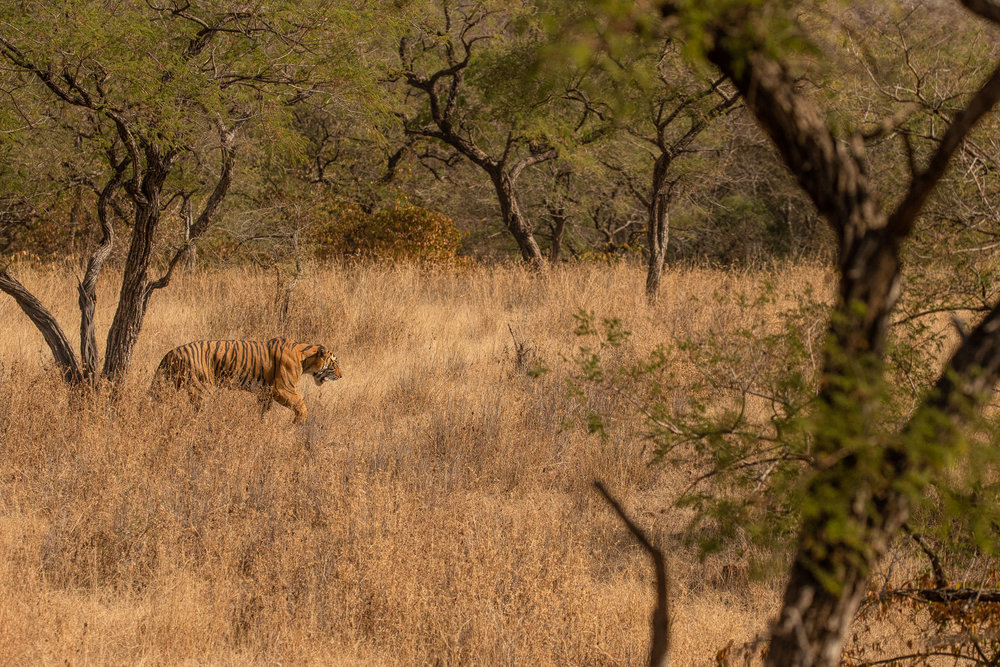yorkshire_wildlife_photographer-7.jpg