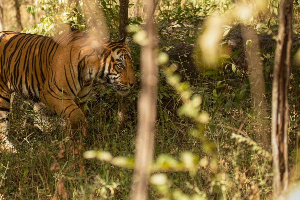 yorkshire_wildlife_photographer-14.jpg