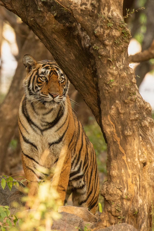 yorkshire_wildlife_photographer-19.jpg