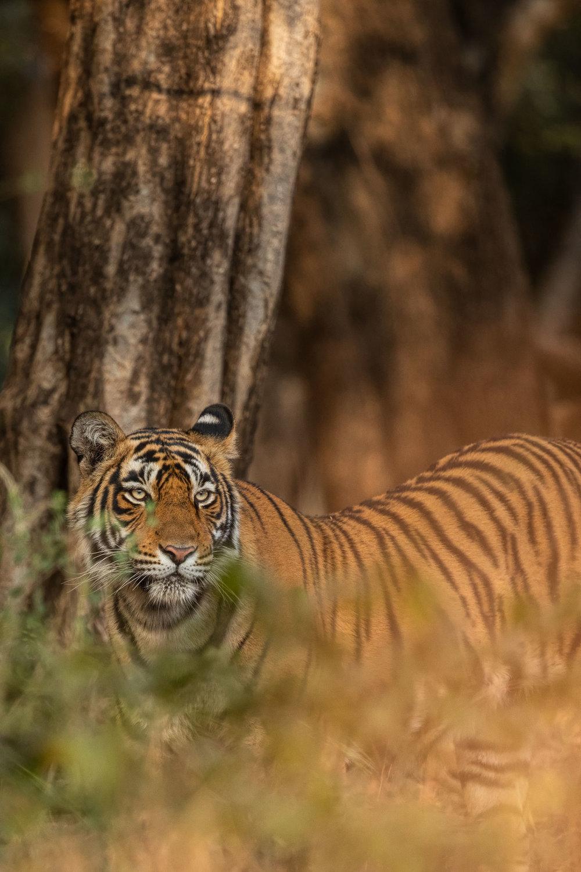 yorkshire_wildlife_photographer-21.jpg