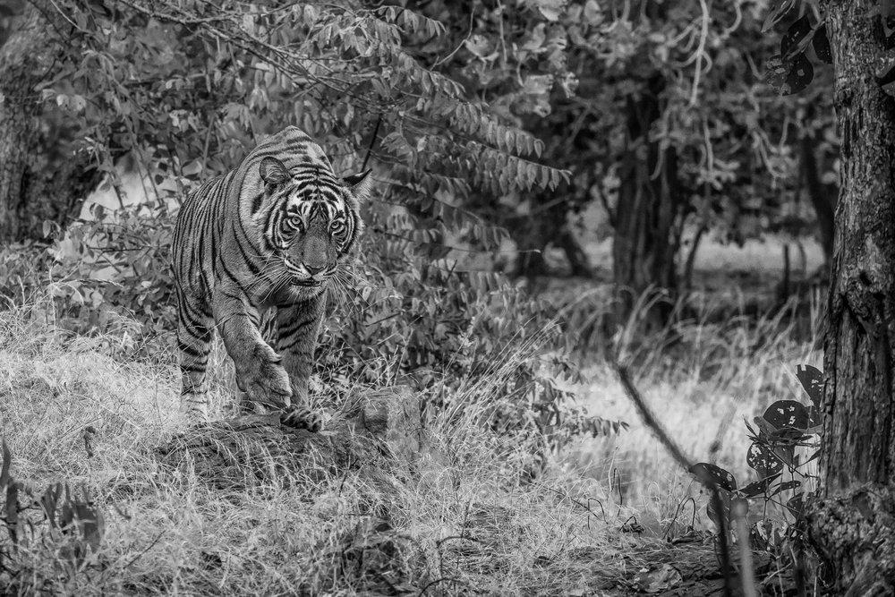 yorkshire_wildlife_photographer-24.jpg