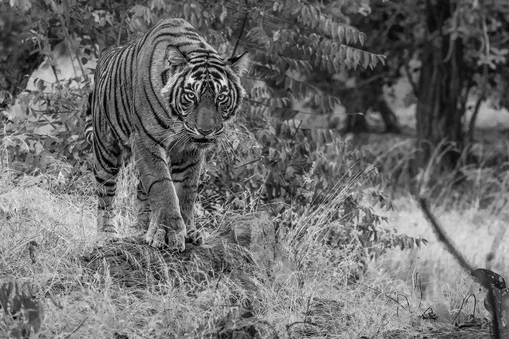 yorkshire_wildlife_photographer-25.jpg
