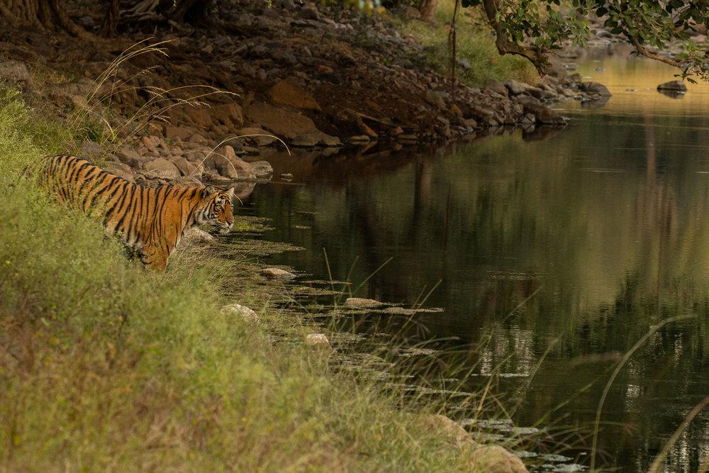 yorkshire_wildlife_photographer-29.jpg