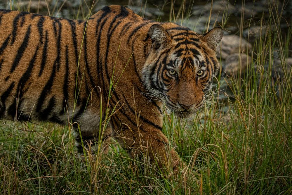 yorkshire_wildlife_photographer-30.jpg