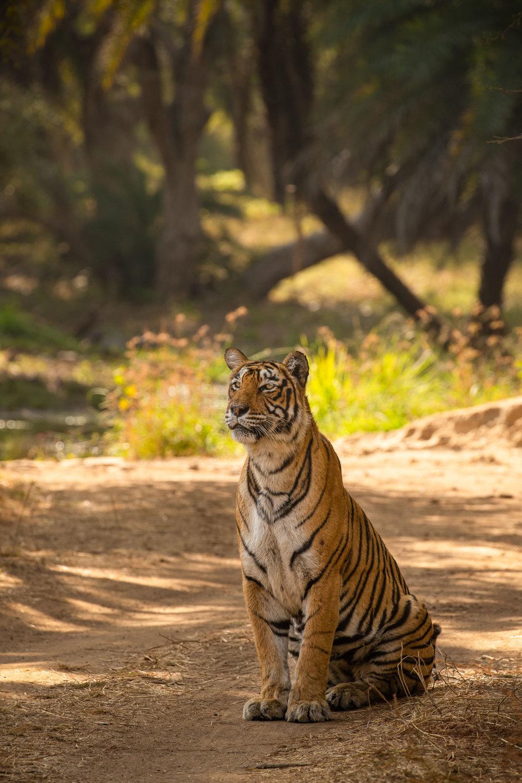 yorkshire_wildlife_photographer-5.jpg