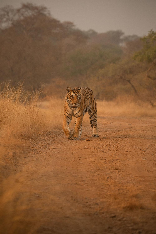 yorkshire_wildlife_photographer-11.jpg