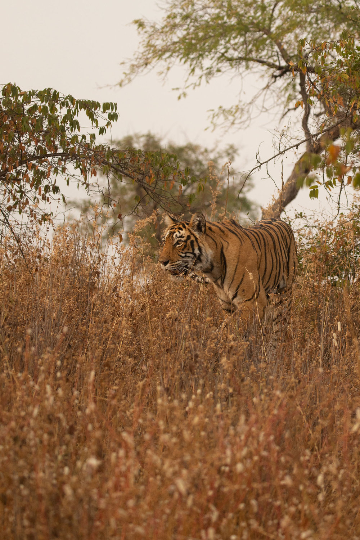 yorkshire_wildlife_photographer-12.jpg