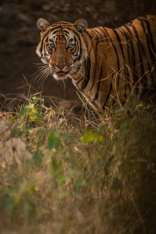 yorkshire_wildlife_photographer-15.jpg