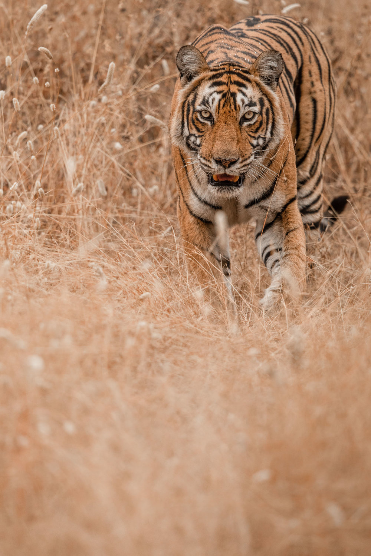 yorkshire_wildlife_photographer-26.jpg