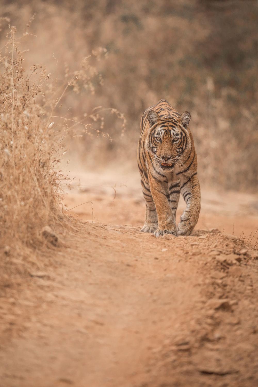 yorkshire_wildlife_photographer-27.jpg