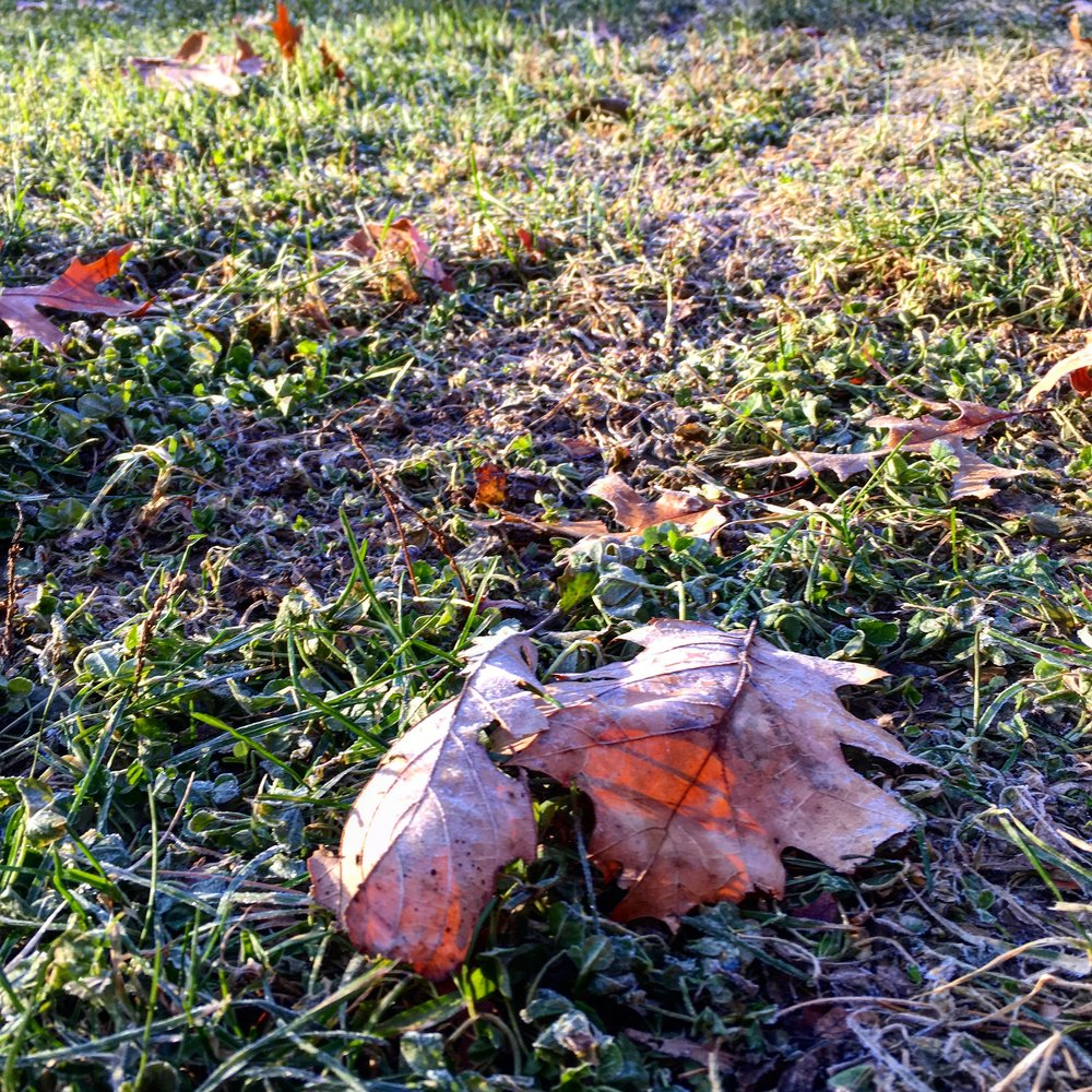 Early morning frost.