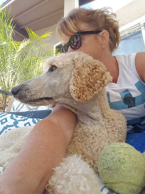 Hugging dogs — Just dogs with Sherri