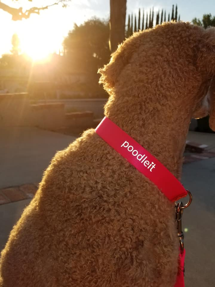 Use coupon code FROMSHERRI to get 5% off your purchase.  Click here to get your own beautiful leash from Poodleit