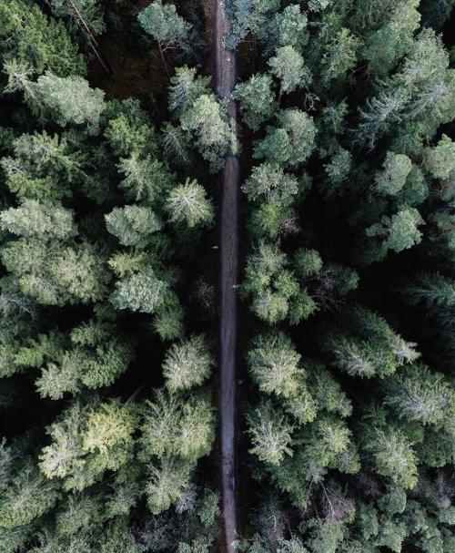 My Forest.jpg