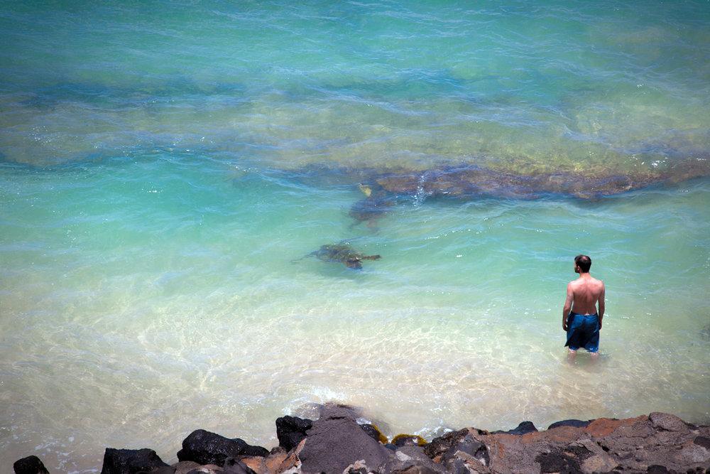 West-Maui-Condo-Rentals-Kaleialoha-P5-turtles.jpg