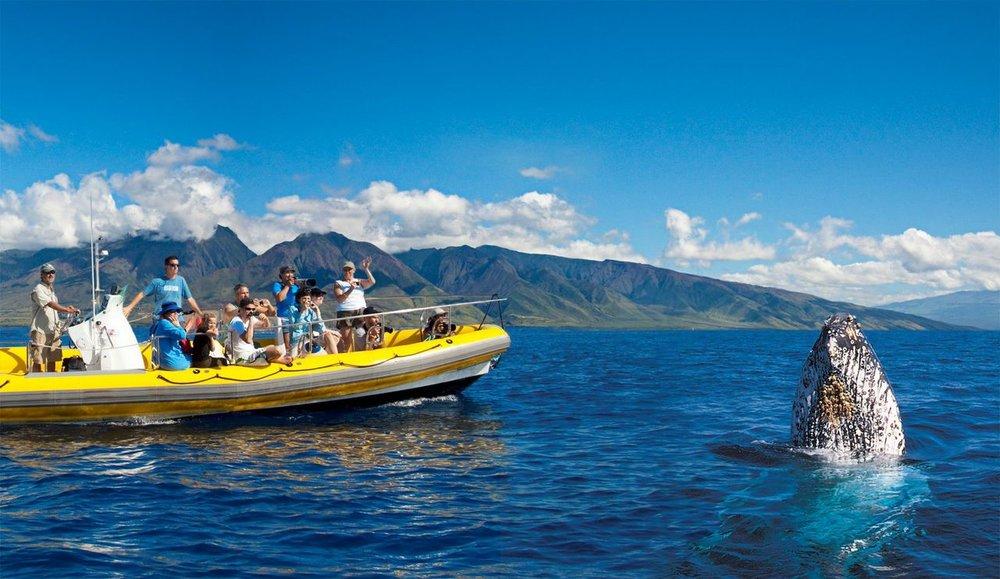 maui-whale-watch-tour-humpback.jpeg