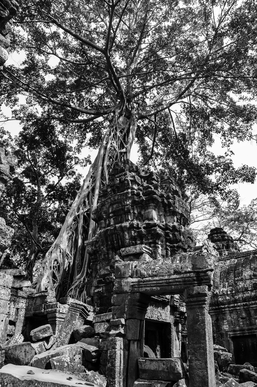 Victorious Nature - Ta Prohm (Cambodia)