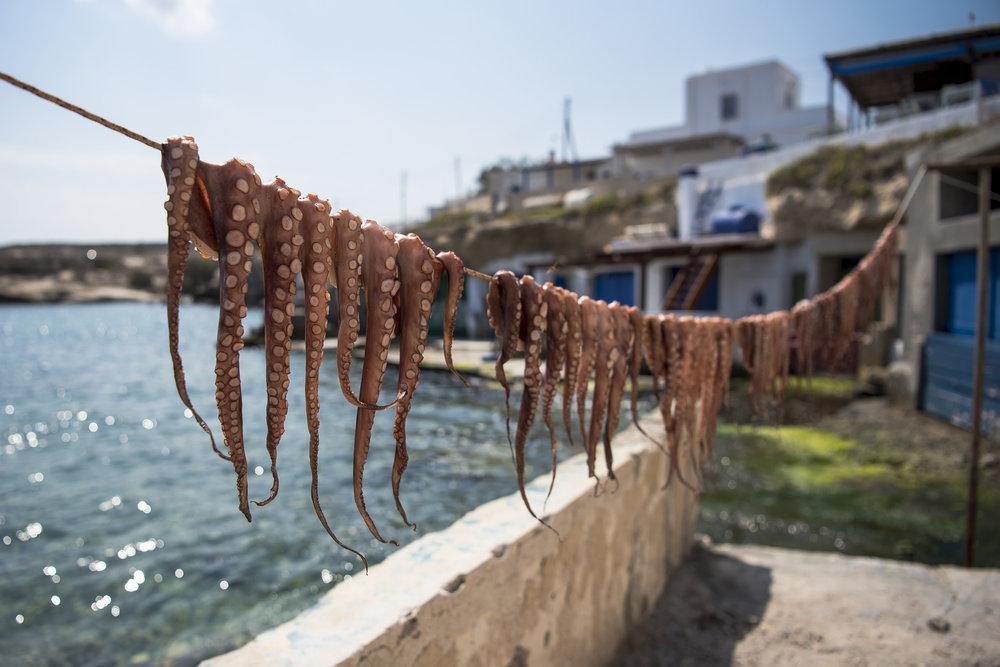 Octopuses - Milos