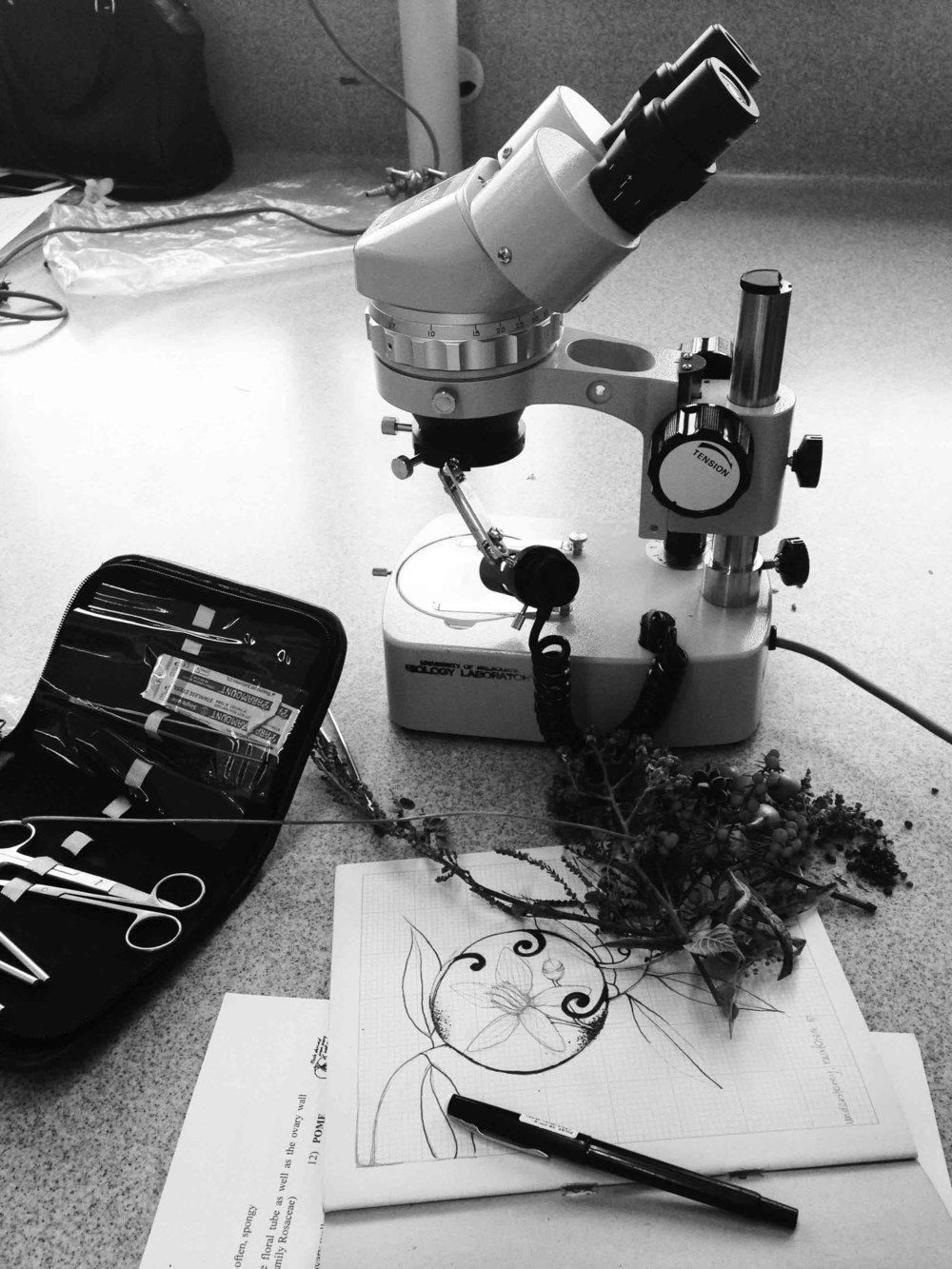 microscope artscience.jpg