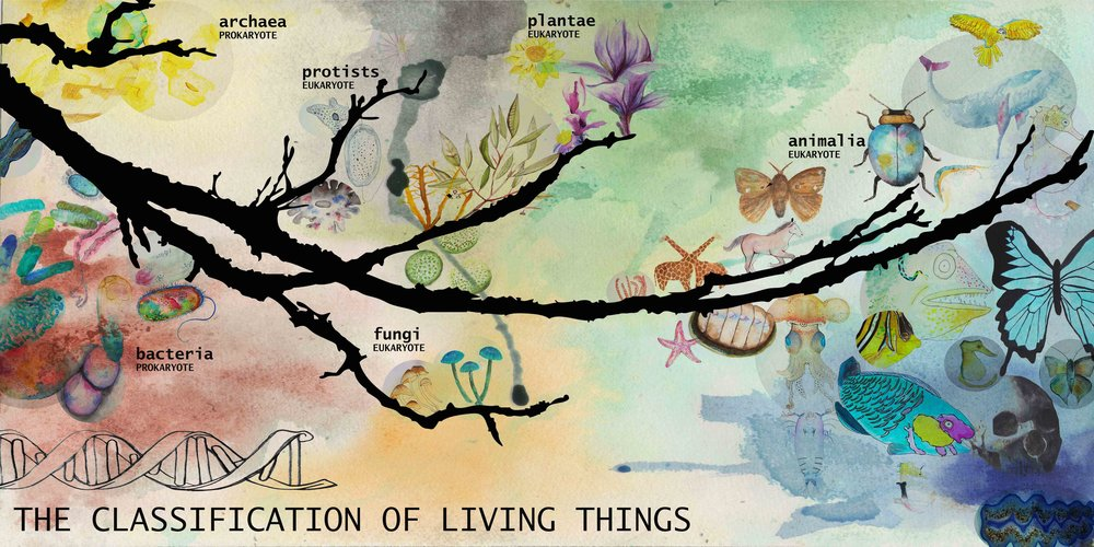 Tree of Life website.jpg