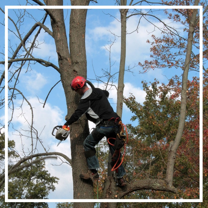 Tree services in Indianapolis