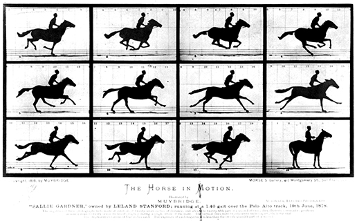 Eadweard Muybridge  The Horse in Motion