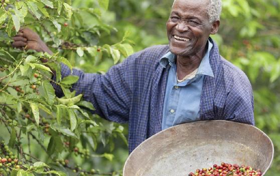 Kenyan Fair Trade Coffee Farmer,  Starbucks
