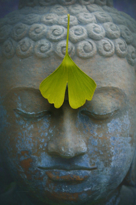 buddha gingko.jpg
