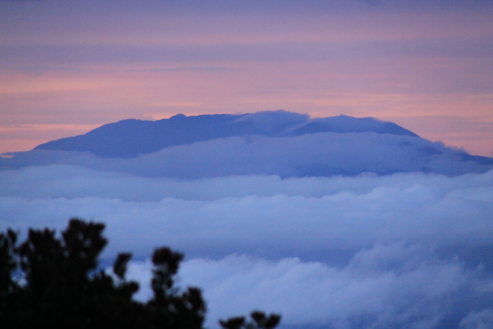 Mt. Leuser National Park,Indonesia