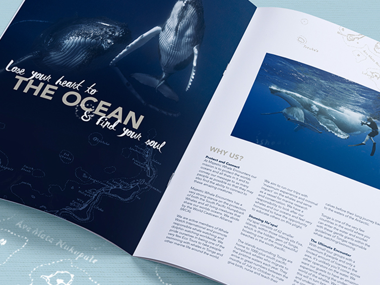 majestic whale encounters travel brochure