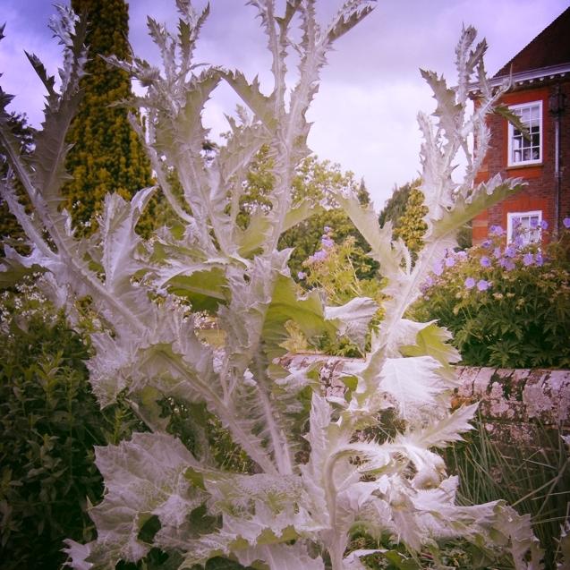Barnett-Hill,-Surrey-Gardens-Trust,-Garden-Events,-Gardening-Lectures,-Gardening-News,-Gardens-in-Schools,-Surrey-Events,-Sussex-Events,-Garden-Membership.jpg