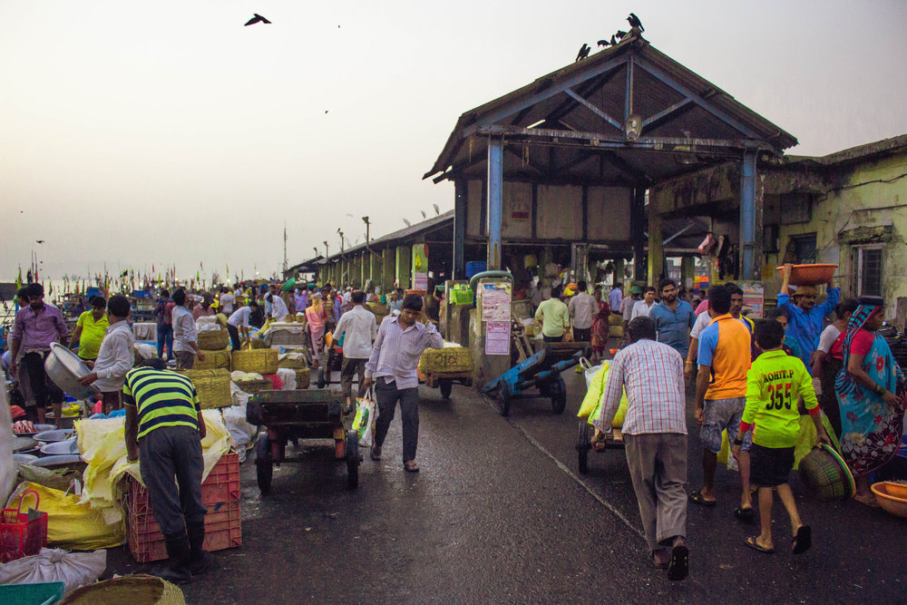 A typical day at Sassoon docks begins at 5 AM when fresh catch is brought in from the sea.