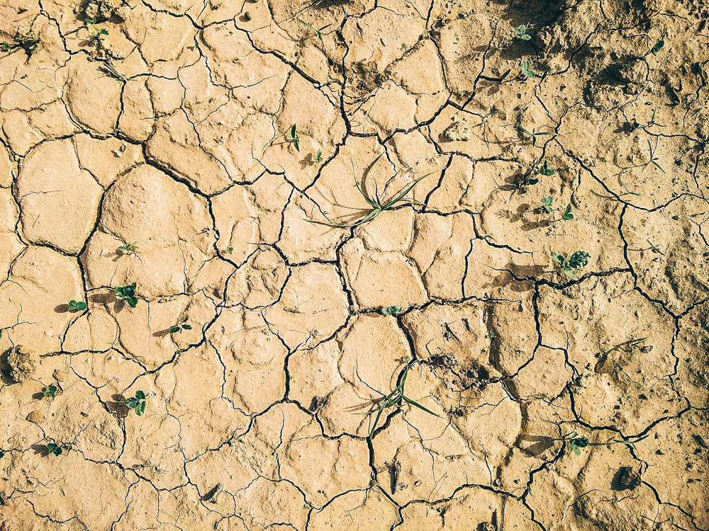 The arid region of Kutch, India