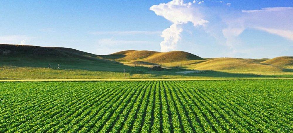 11182014_crop-field8201.jpg