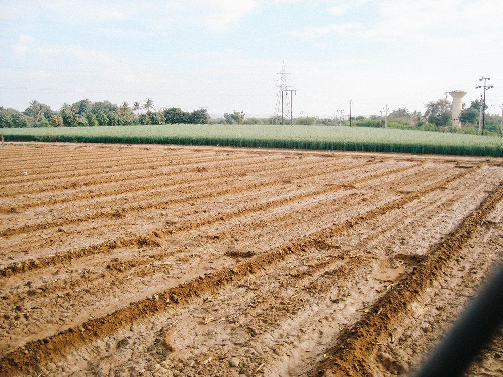 Green Agricultural Fields jpg