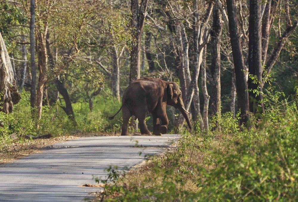 Wildlife in BRT | Image credit: Radha Rangarajan