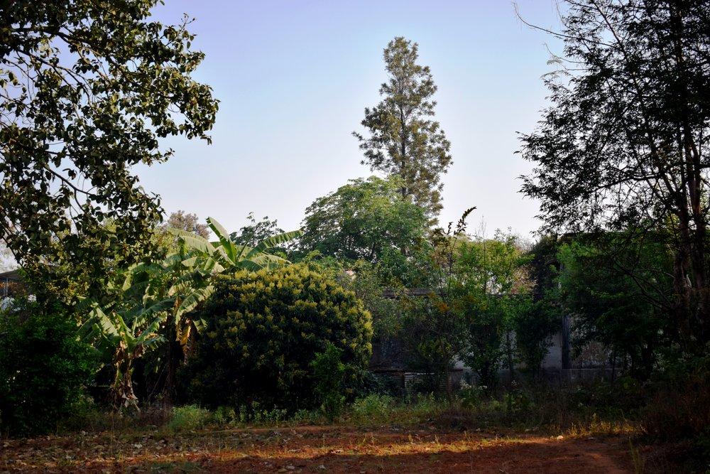 Fruit trees in Karen Meredith's backyard