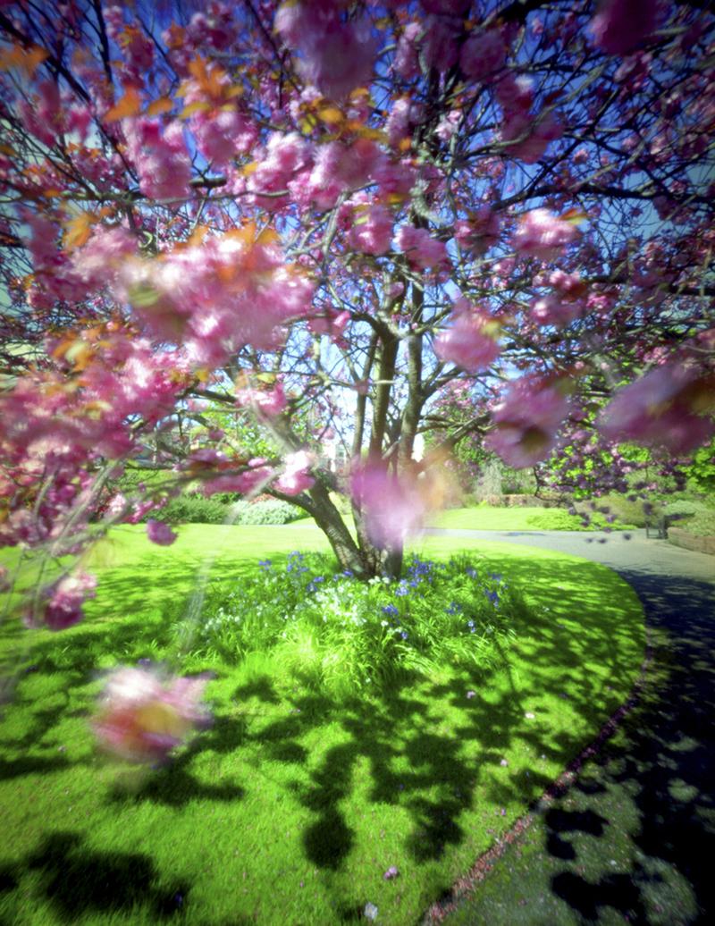 arboretum-001.jpg