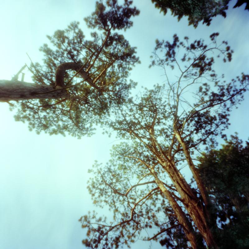 arboretum-003.jpg