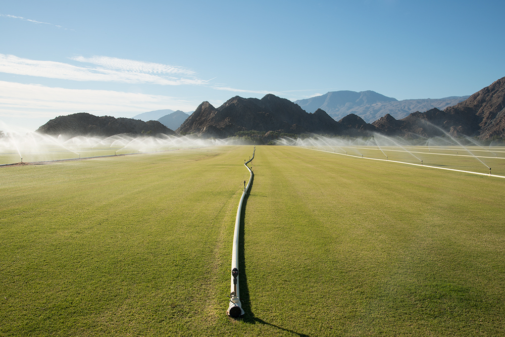 Turf cultivation, La Quinta, California, USA, 2015.