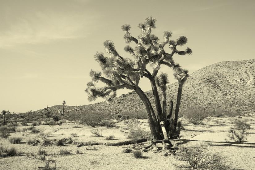 joshua-tree-007.jpg