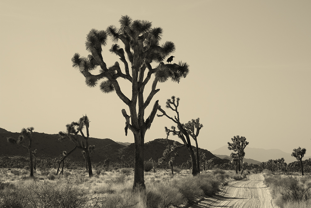 joshua-tree-008.jpg