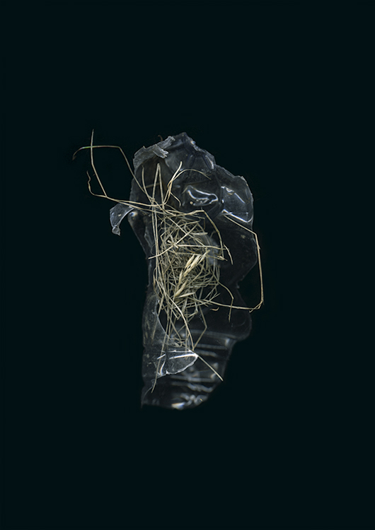 entangled-bank-014.jpg