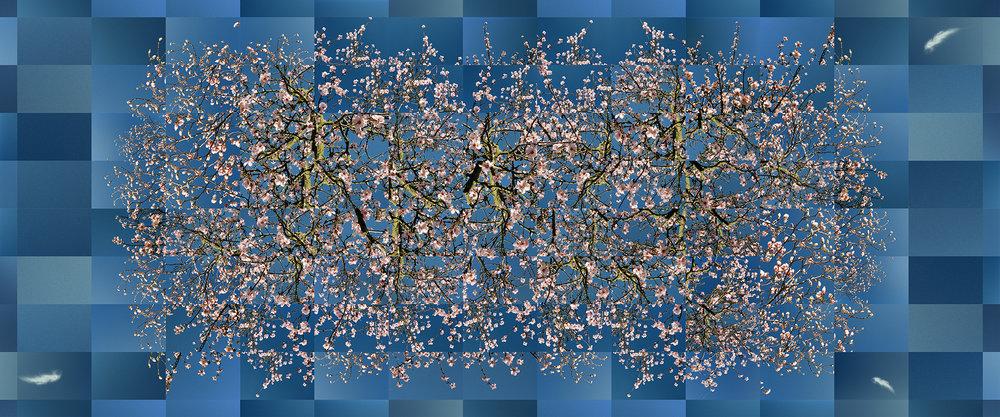 Blossom Explosion