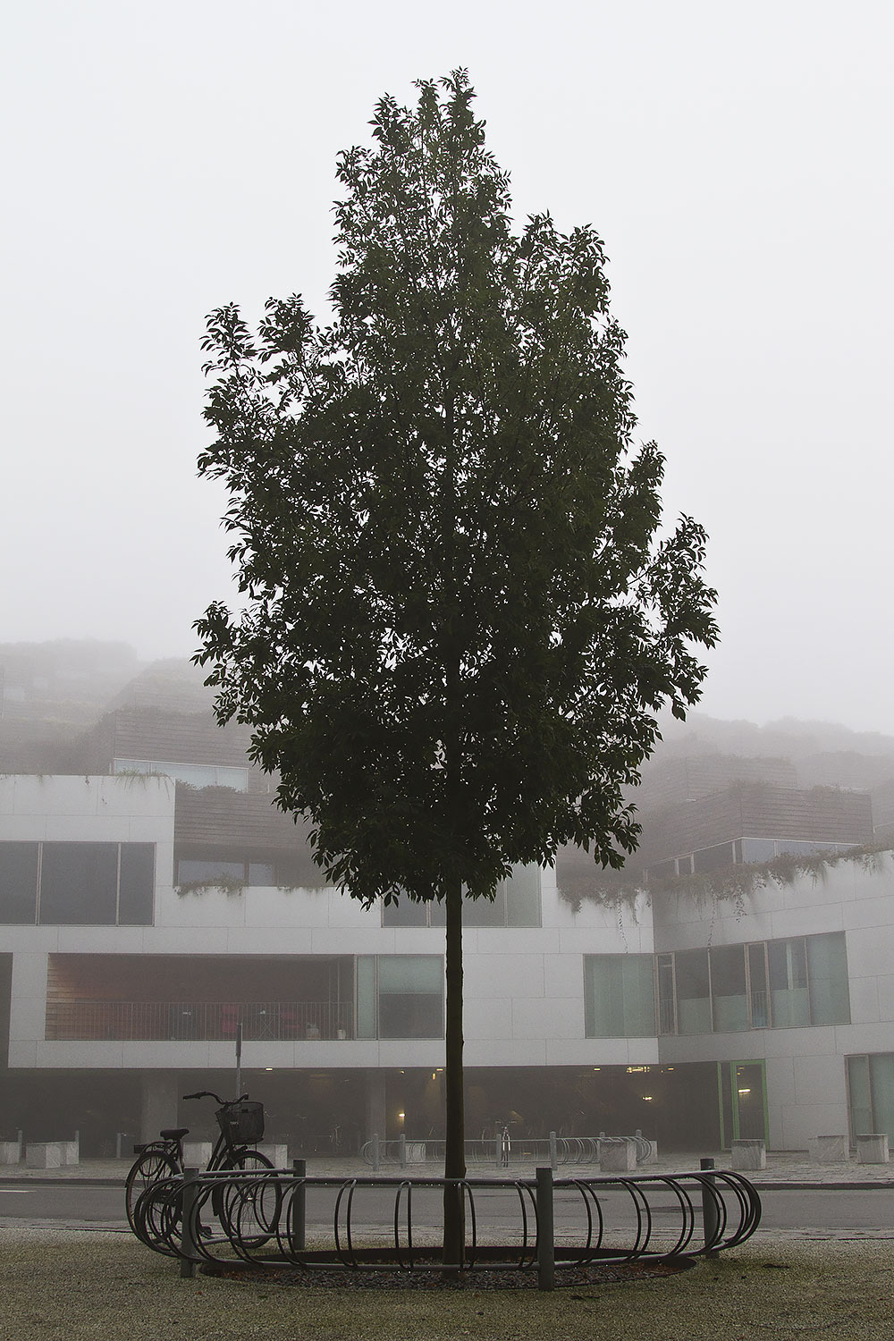 FoggyMorning_1.jpg