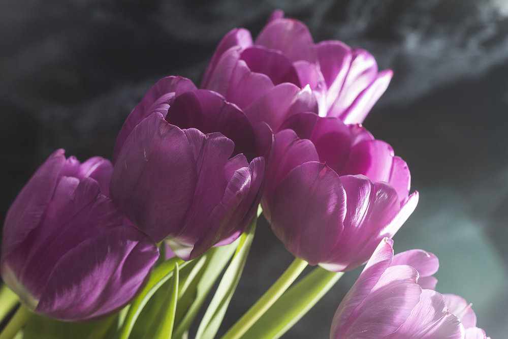 Smokey-Tulips.jpg