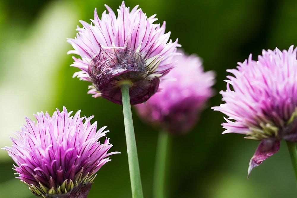 UK_Flowers_3.jpg