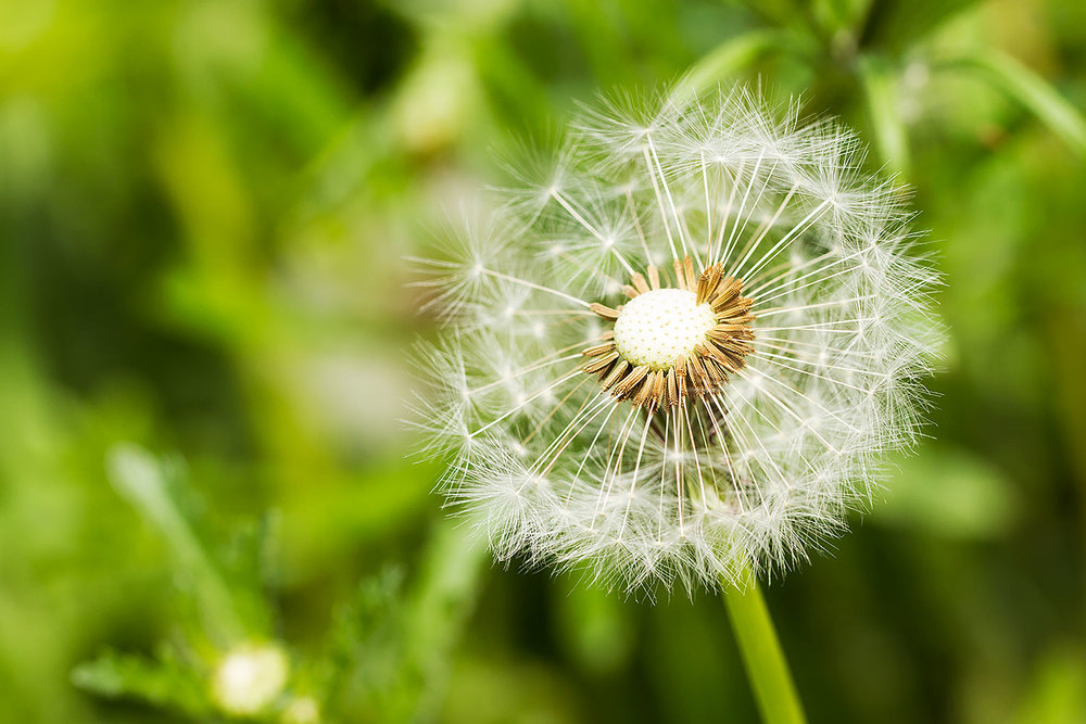 UK_Flowers_4.jpg